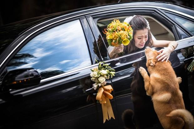 ISPWP fotografías de bodas